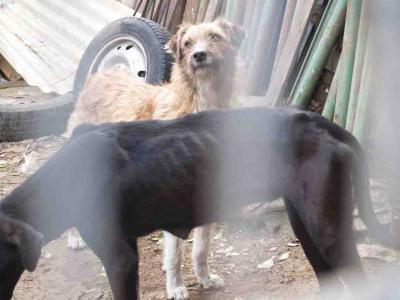 AYUDEMOS  A LOS ANIMALES !! ELLOS TAMBIEN SIENTEN !!