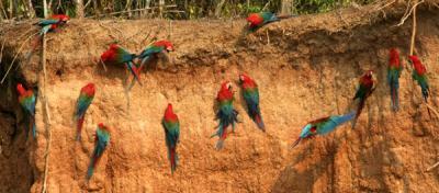 Perú: a la conquista del turismo de naturaleza